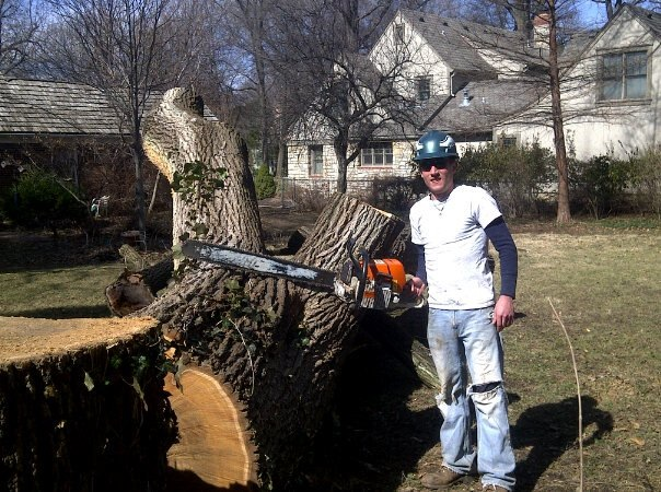 Tree and Stump Removal 1