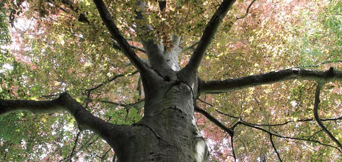 Integrity Tree Service Kansas City Mo