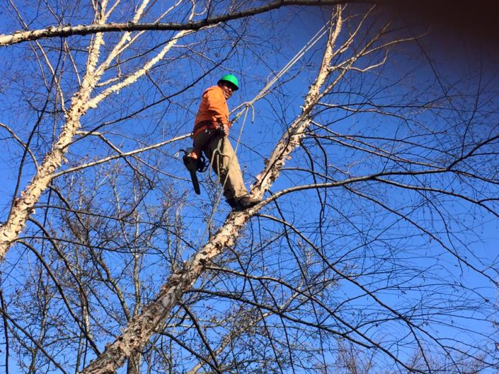 grade a tree care tree removal