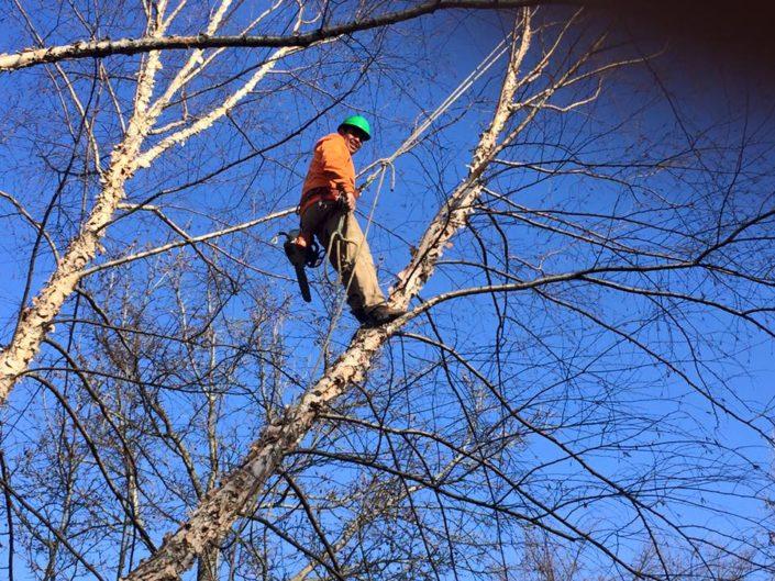 grade a tree care tree removal